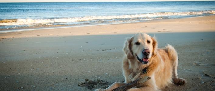 Duchas para perros en una playa de Barcelona