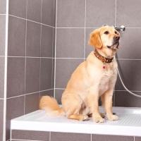 ¿Cómo duchar a tu perro?